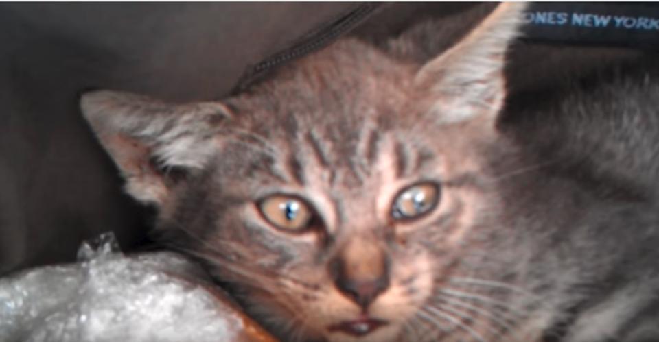 Kitten at the vet