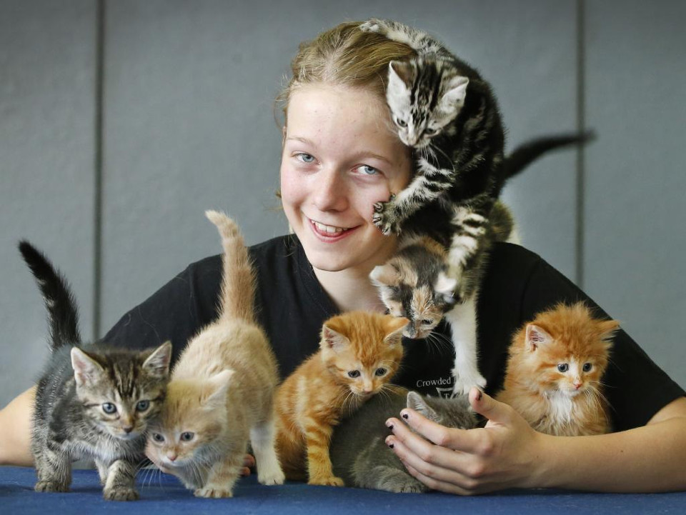 Girl Uses Birthday Money To Save 14 Abandoned Kittens