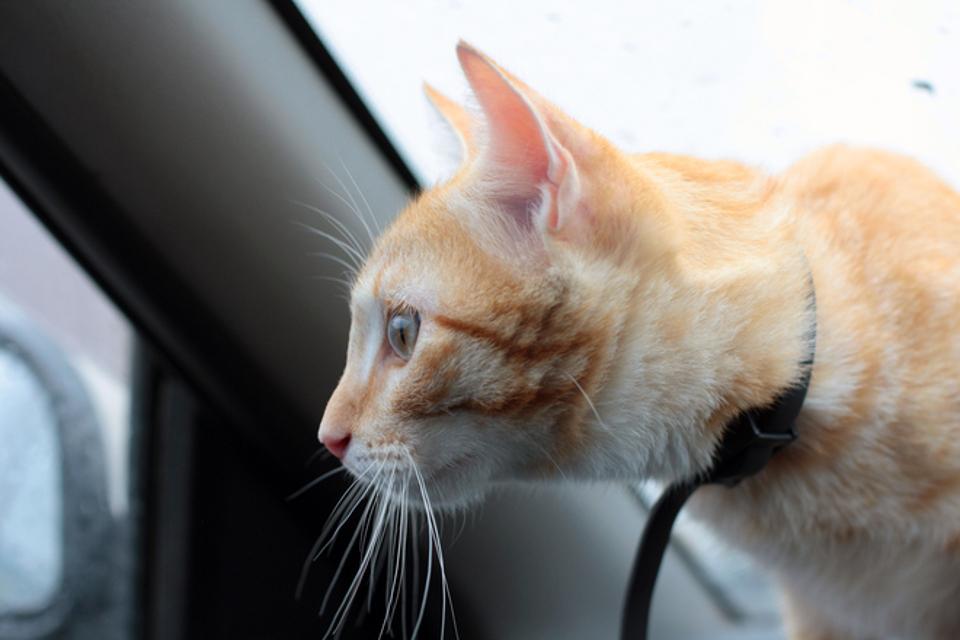 Man Accused Of Leaving Cat In Hot Car