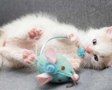 Meet The Ridiculously Cute Kitten Rescued at Machu Picchu