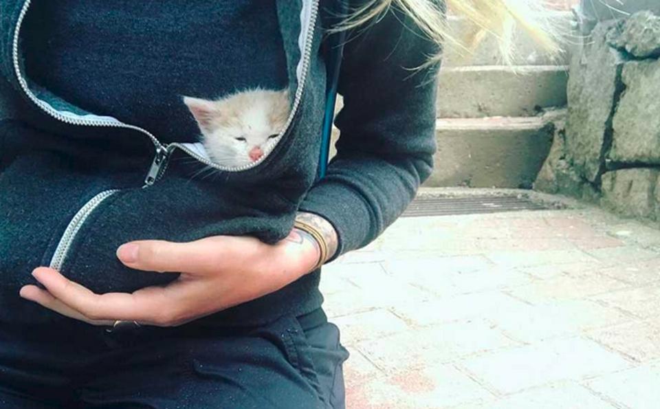 Munay kitten