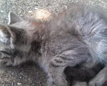 Sad Kitty Left To Die On The Side Of The Road, Is Saved