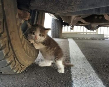 Stray Kitten Was Clinging to Truck.  Who could say no to that face?
