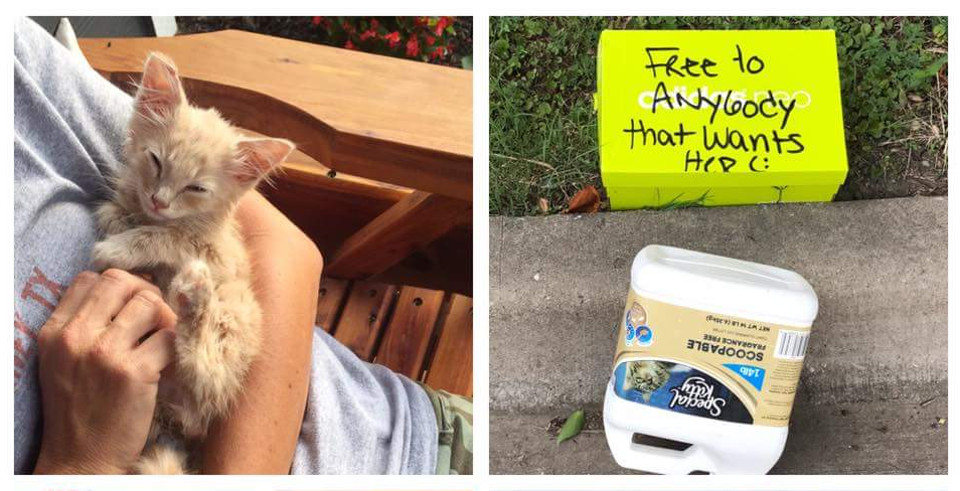 Kitten Abandoned In A Box With A Note Is Saved