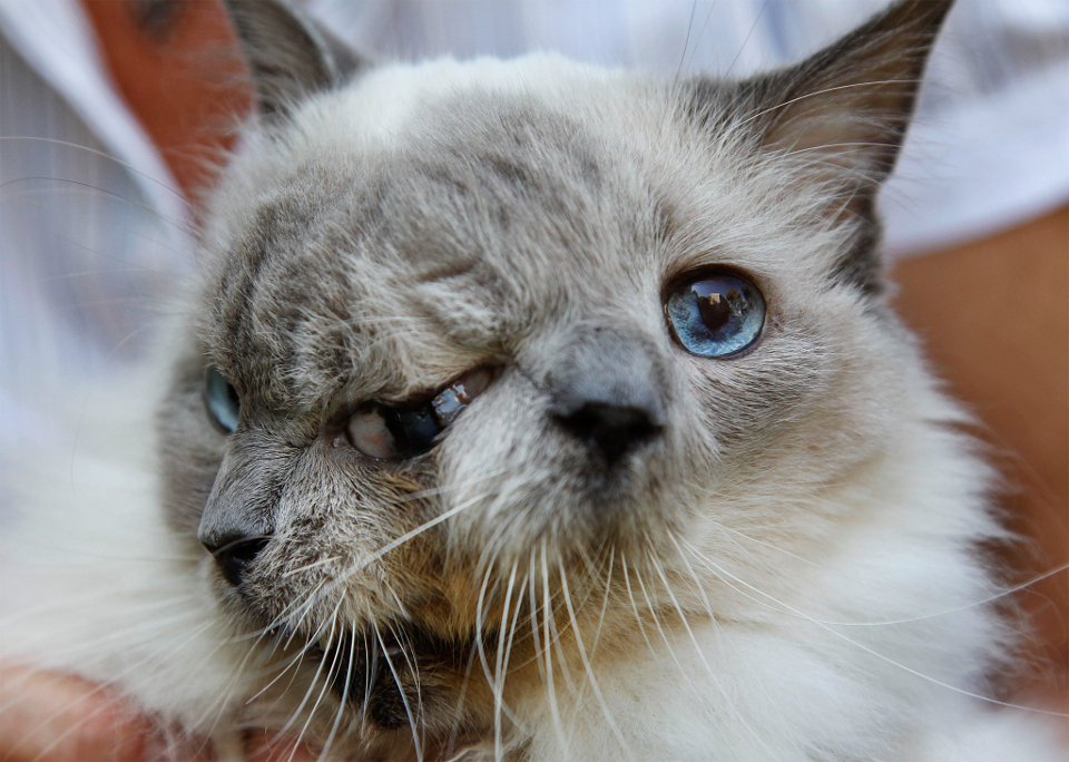 Two Faced Kitty Passed Away At The Age Of 15