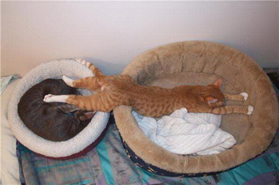 Kitte sleeping
