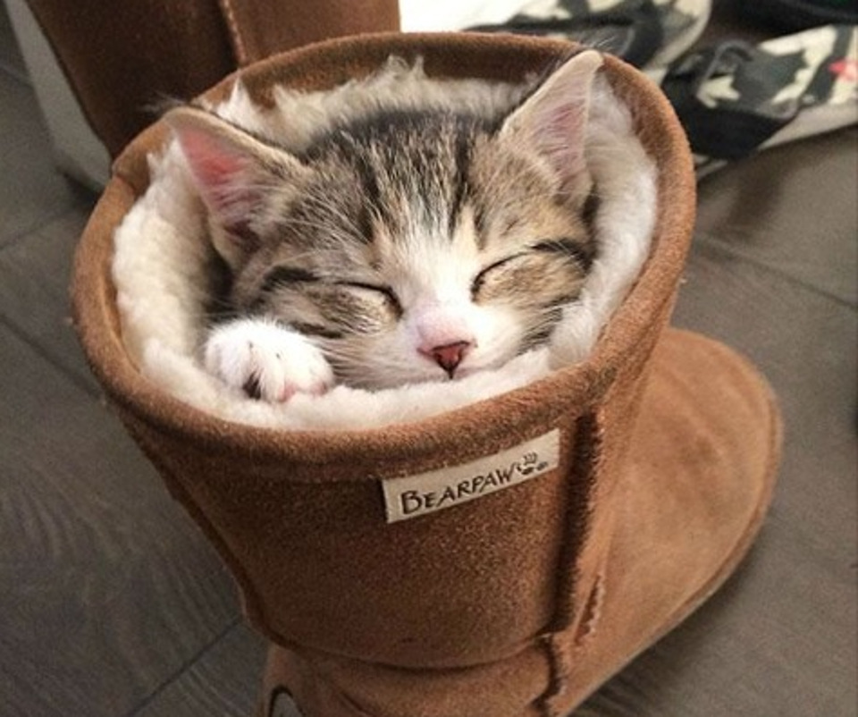 Cat sleeps in boot