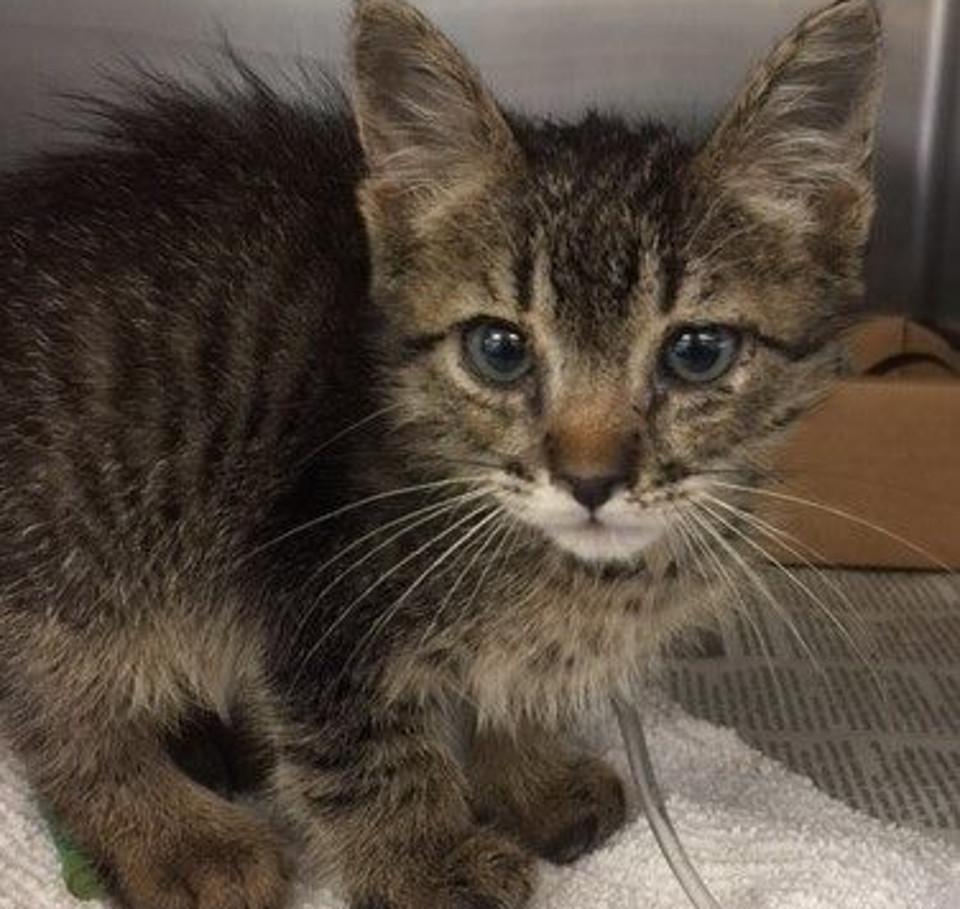 kitten under recovery