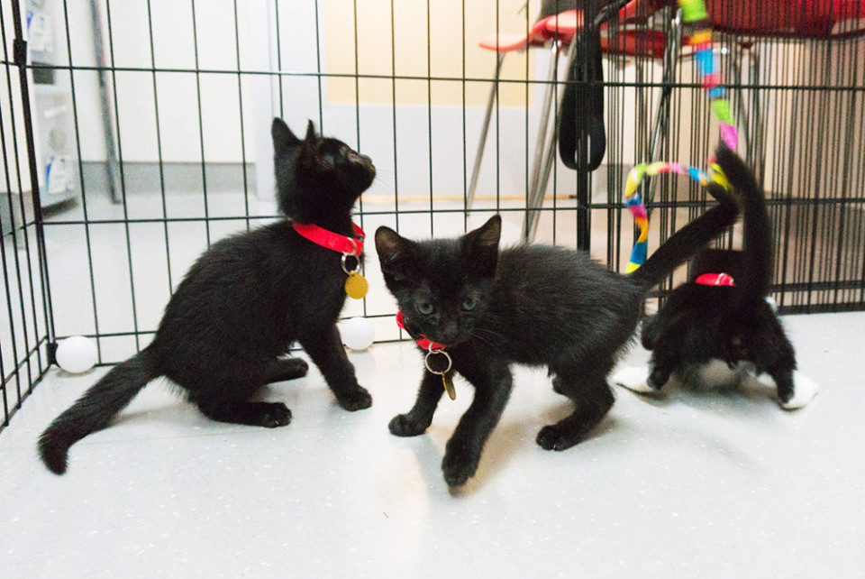 Kittens rescued from trash
