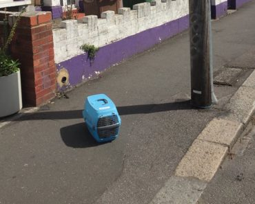 Cat Dumped In The Middle Of The Sidewalk With All His Stuff