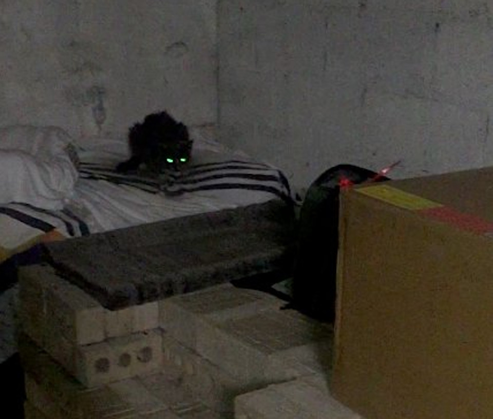Cat Living In The Same Basement Where She Was Abandoned 20 Years Ago Is Rescued