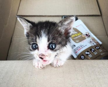 Injured Stray Kitten Walked Up To A Couple Crying For Help