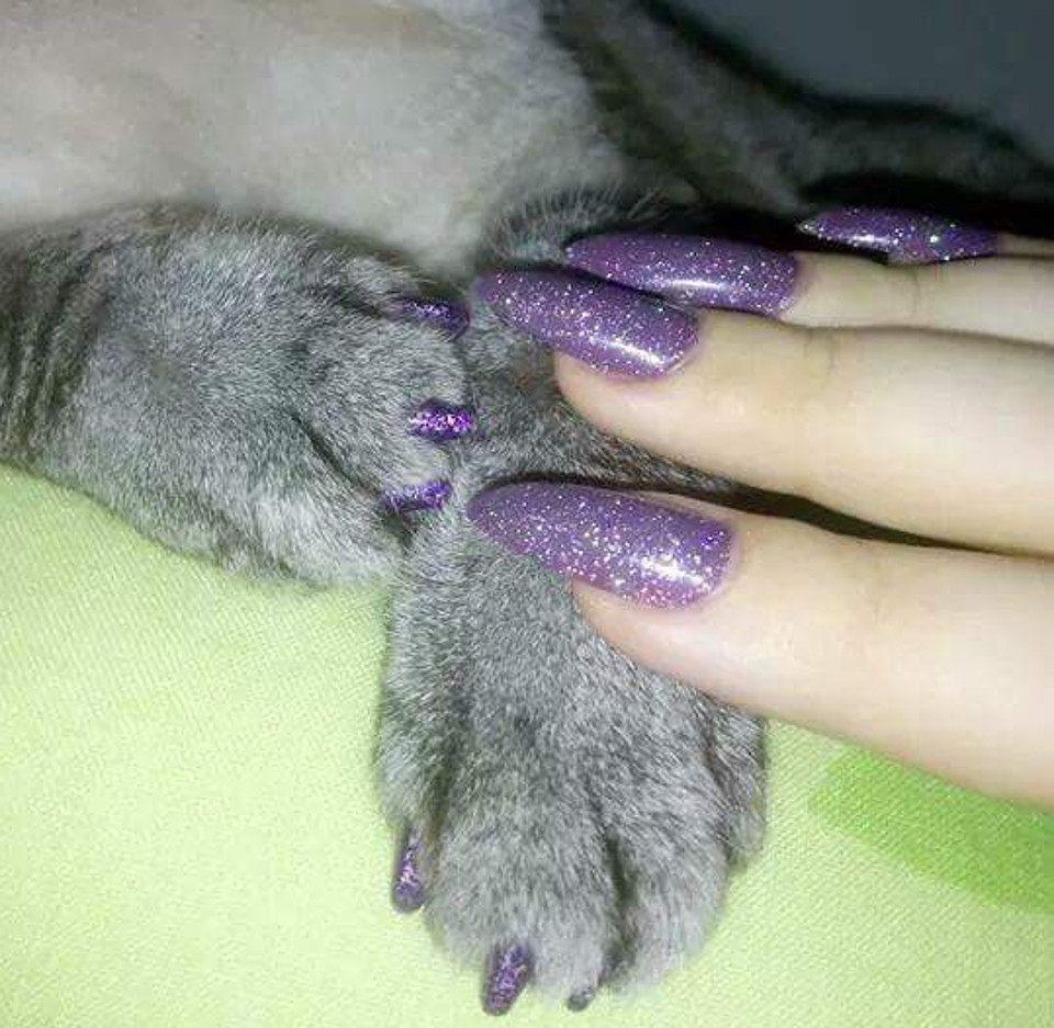 Is It Safe To Paint Your Cat's Nails?