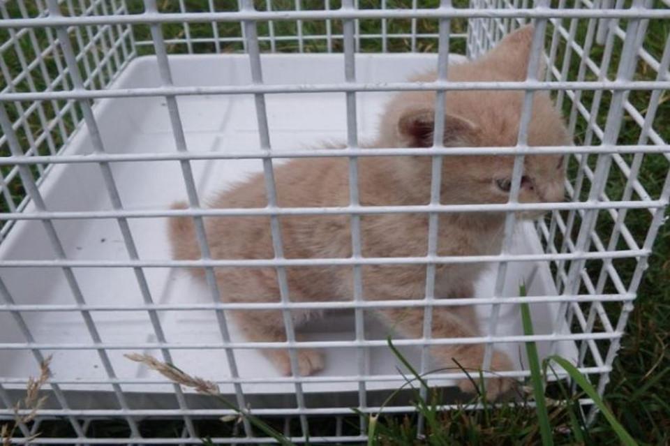 Kitten Found 20ft Up Tree, Huddled Next To Chicks In BIRD'S Nest
