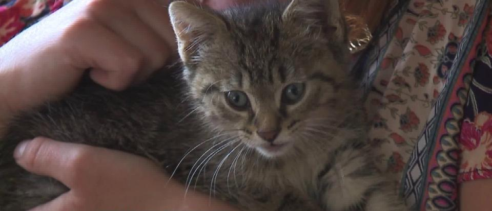 Kitten Who Was Trapped In SUV Wheel Well While It Was Being Driven Was Saved!