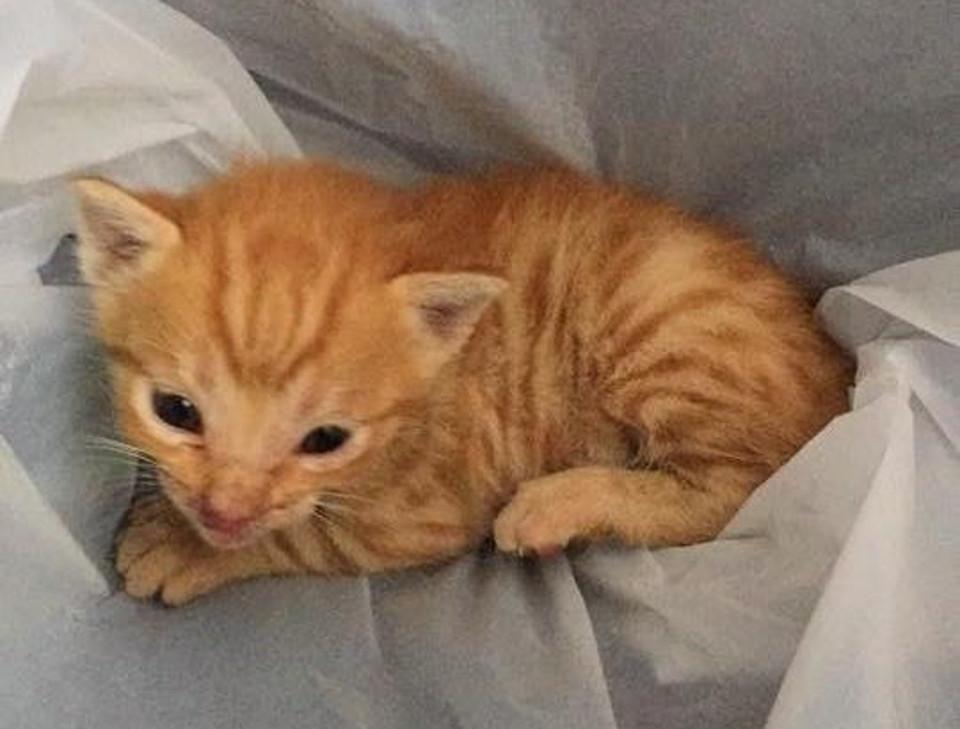 Kitten got adopted