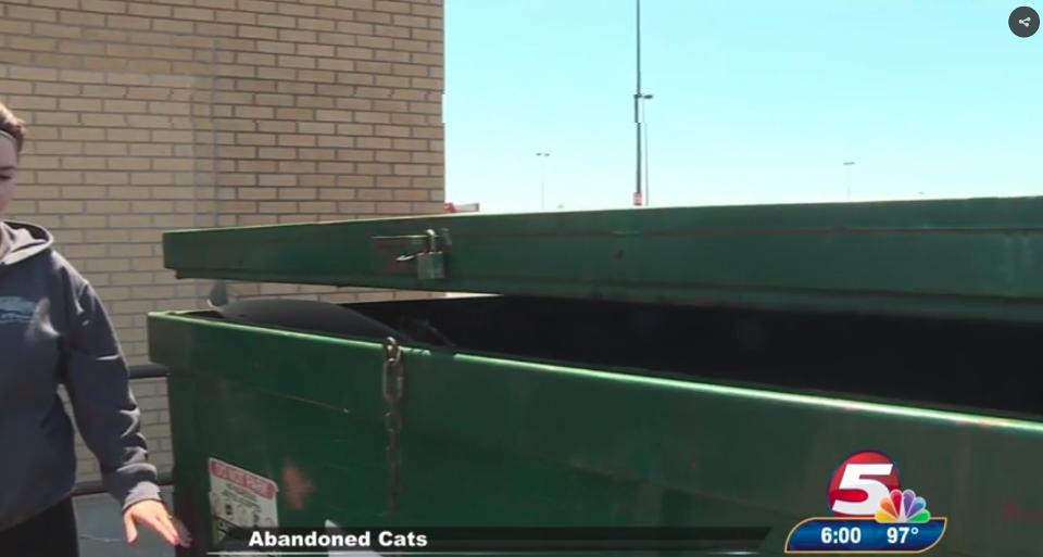 Cat Mother And Her Kittens Safe After Being Thrown in Bismarck Dumpster…