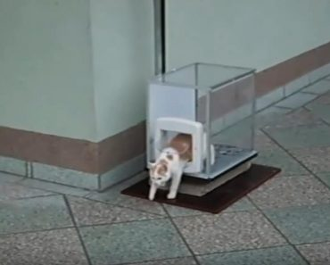 Human Built His Cat An Elevator To Get Up And Down Apartment Floors!