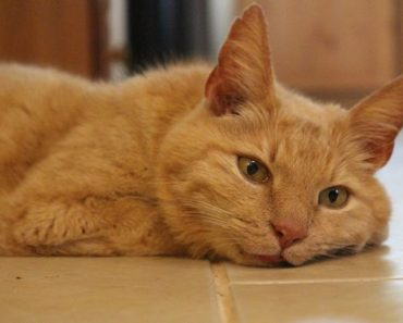 Owner is Reunited With Her Cat 11 Years After He Went Missing