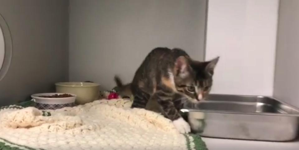 Special Kitten Finds A Home After Her Video Went Viral