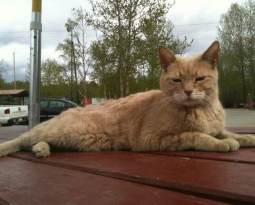 Stubbs, The Mayor of Talkeetna, Alaska, Has Sadly Passed Away At 20 Years Old