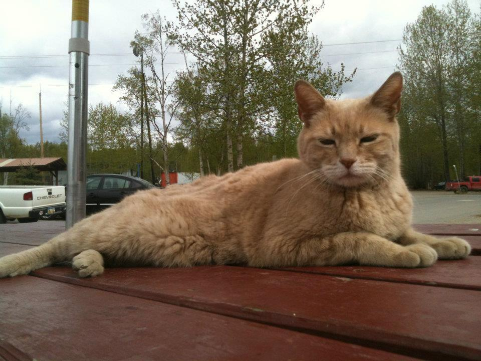 Stubbs, The Mayor of Talkeetna, Alaska, Has Sadly Passed Away At 20 Years Old