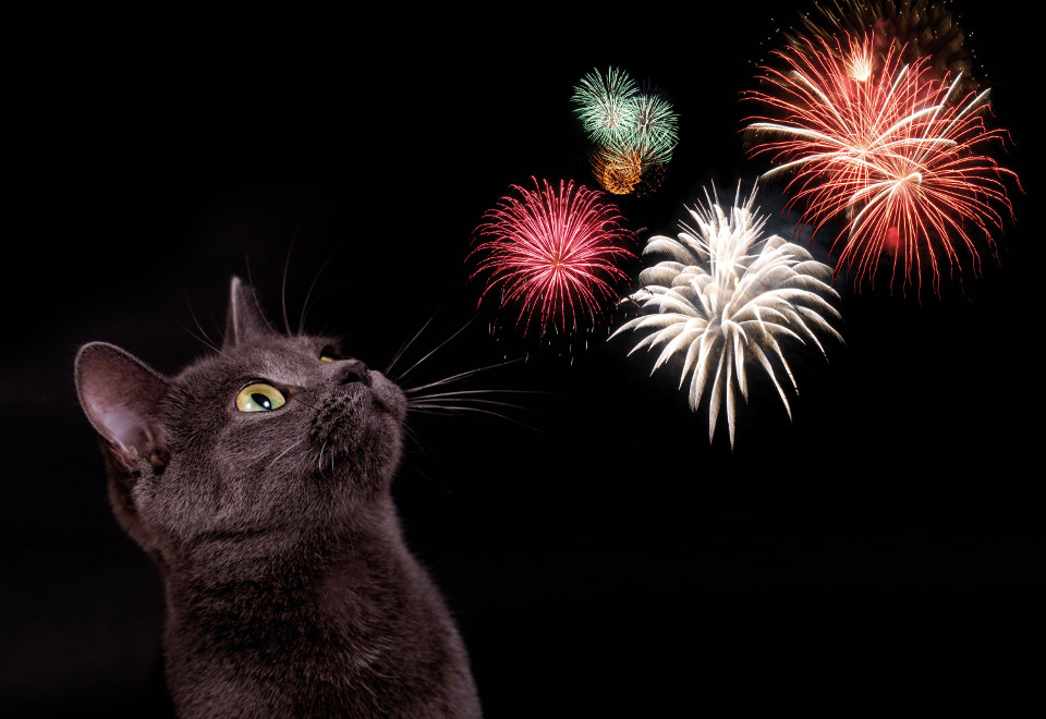 Town In Italy Switches To Silent Fireworks To Reduce Anxiety In Animals!