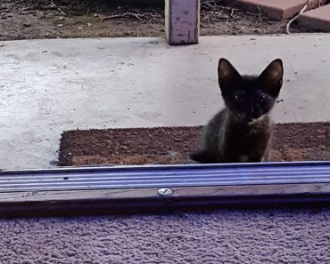 Woman Opens Door and She Finds a Cute Surprise Waiting For Her on Her Doorstep