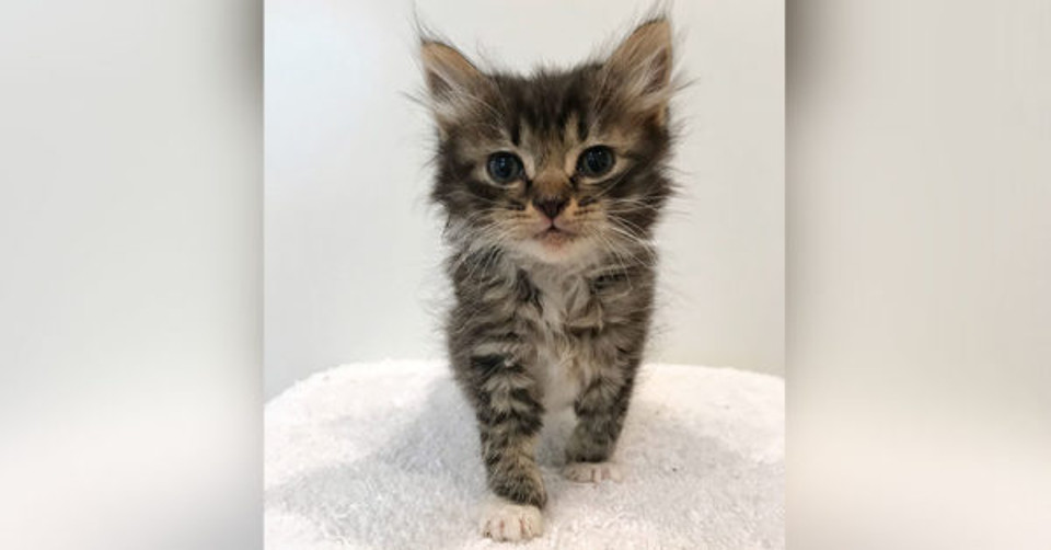Rowan the kitty