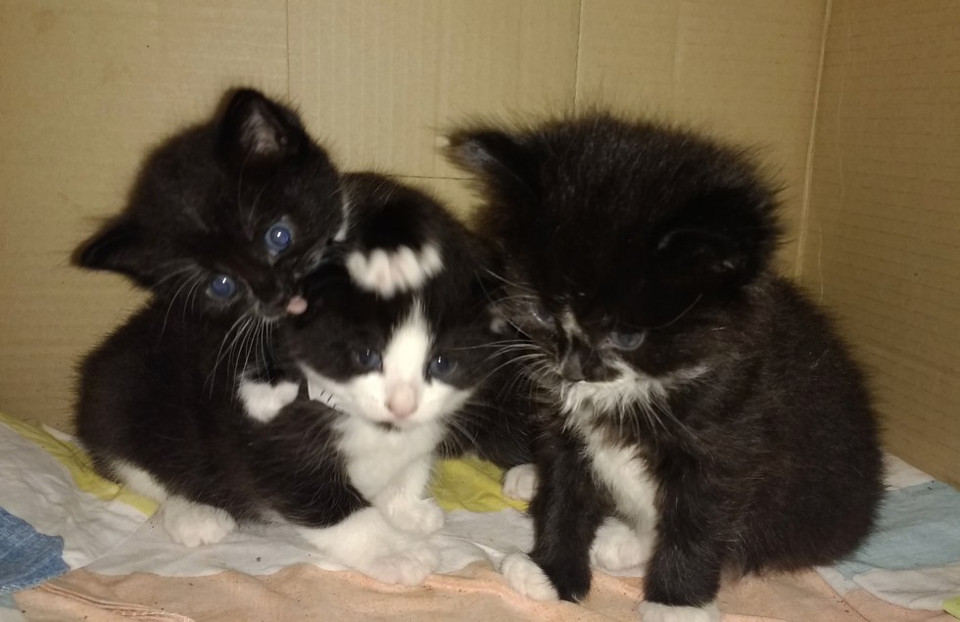 London Bus Driver Finds Three Kittens Abandoned Onboard!