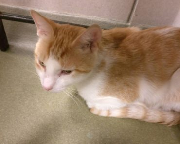 Extremely Shy Shelter Cat Hiding In A Corner Is Adopted. 90 Minutes Later…