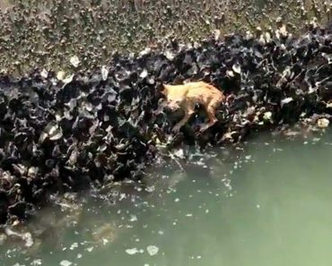 They Thought They Saw An Octopus But They Made An Adorable River Rescue