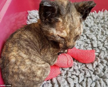 Kitten Rescued From Fire Finds A Loving Home