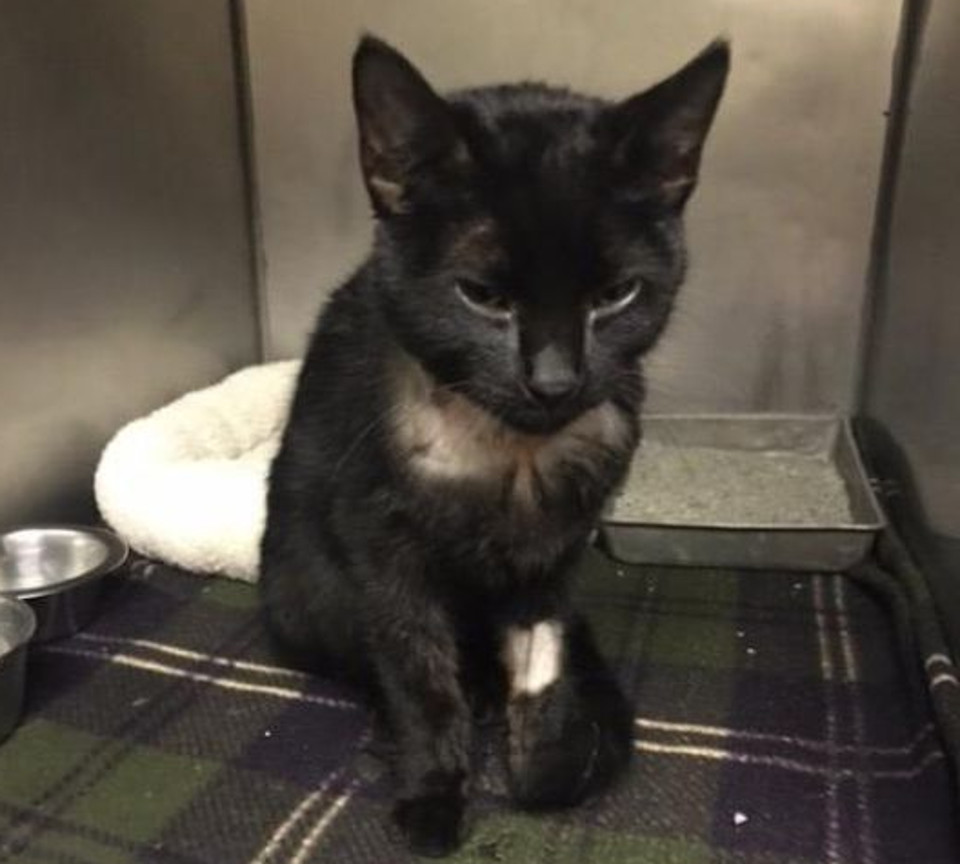 Kitten Who Was Tied to a Bush and Left For Dead Gets a Second Chance