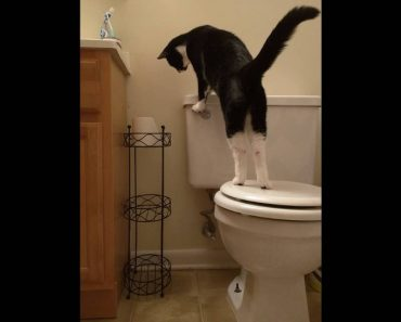 Man Had No Idea Why His Water Bill Was So High. Then He Realized What His Cat Was Doing