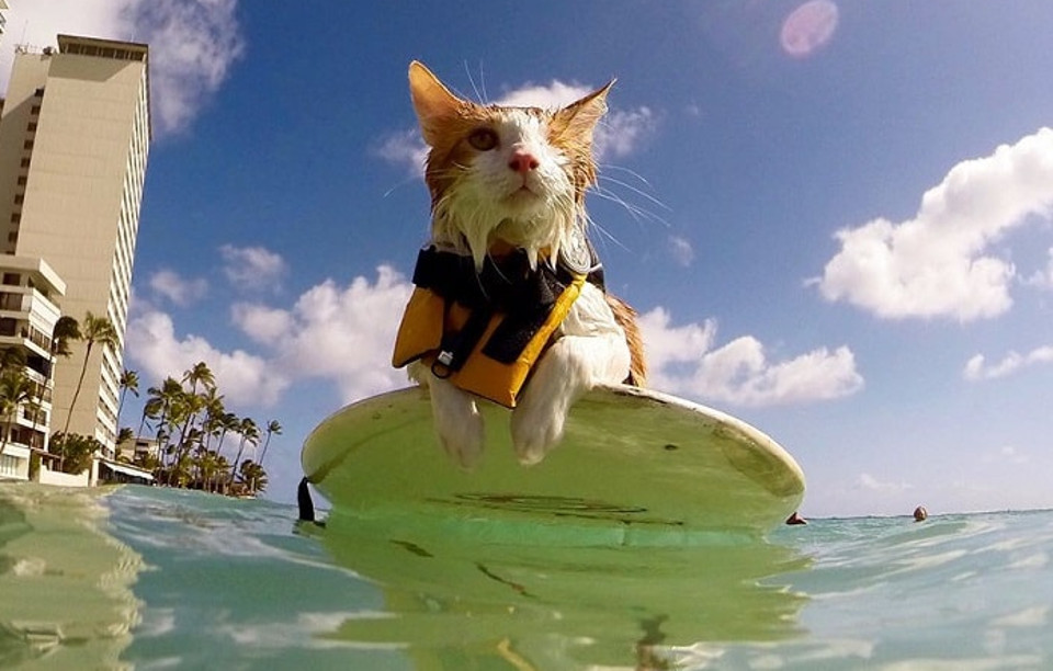 One-Eyed Kitty Loves Swimming And Surfing In Hawaii!