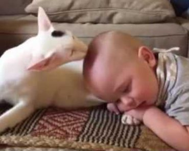 They Were Not Sure How Their Adopted Cat Would React To Their Baby!