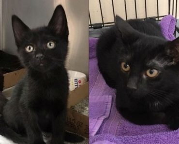 Two Kittens Were Stolen From Sayreville Shelter. Thief Caught on Camera?