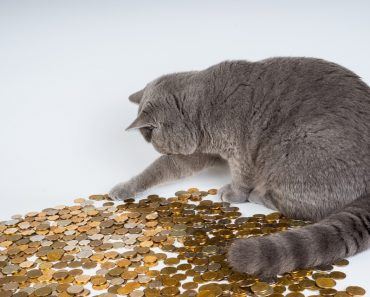 Woman Leaves $300,000 To Her Cats In Her Will