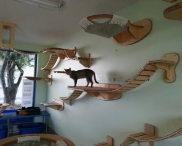 Guy Makes The Most Amazing Feline Jungle Gyms!