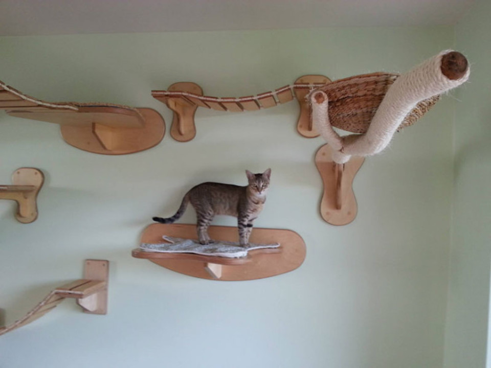 German cats furniture