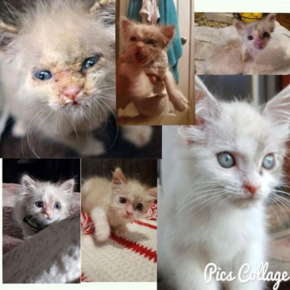 Jorah transformation