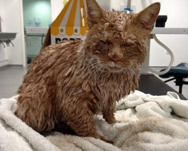 Ginger Cat Cruelly Covered In Concrete Is Saved
