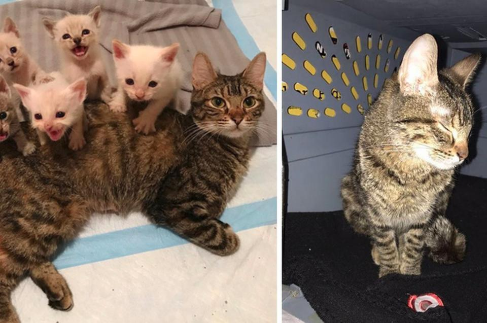 Cat Mama Stayed Awake For Days Caring And Protecting Her Babies Until They Were Safe!