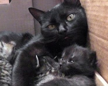 Cat Mom Is Having The Cutest Conversation With Her Babies!