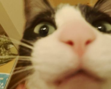 Cat Sees Her Human After 3 Long Days. Her Reaction Is Priceless!