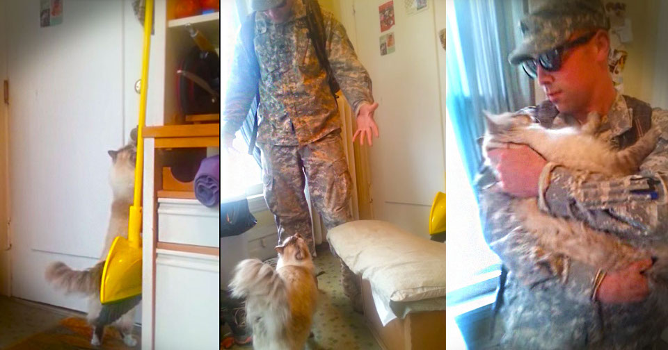 Cat Welcomes Her Soldier Daddy. Her Reaction Is Priceless!