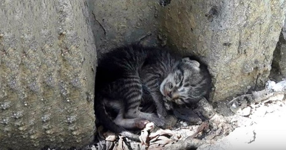 Homeless Kitten Lying Half Day Aside of Street – Finally Getting A Real Bed!