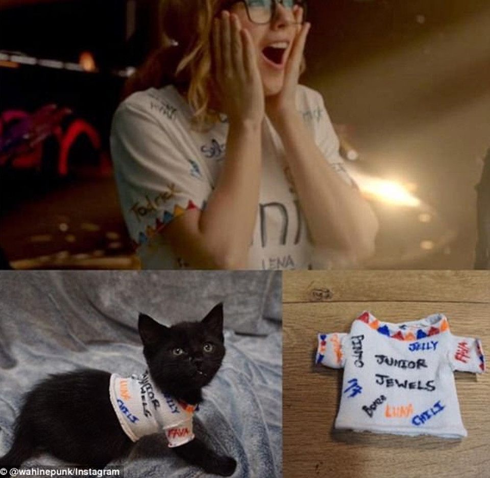 Kittens dressed like Taylor Swift