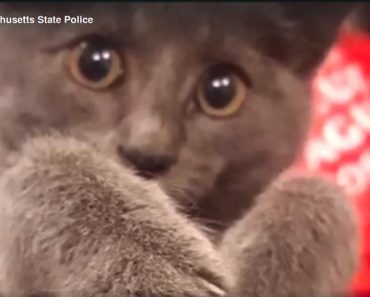 Purr-fect Ending: Kitten Rescued After Shutting Down Traffic On Busy Highway